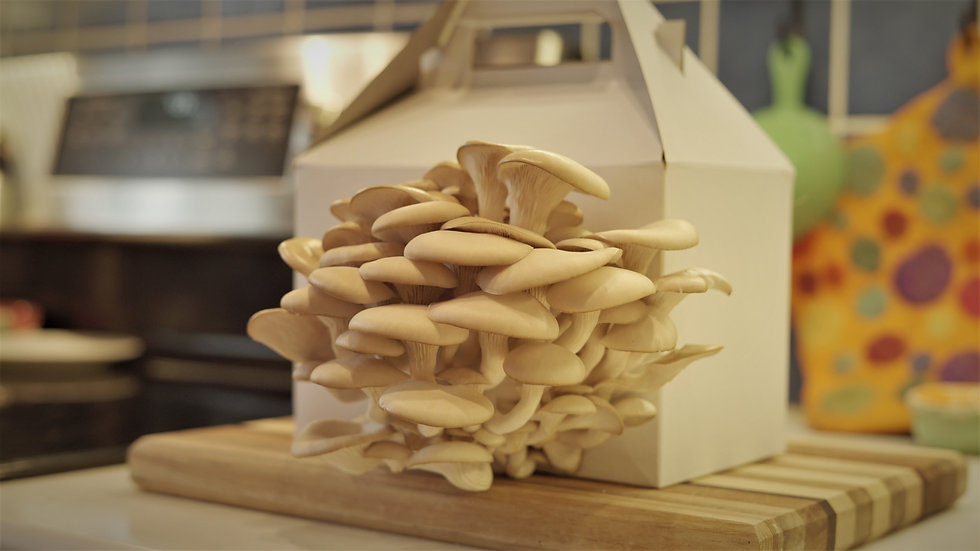 Oyster Mushroom Side Next to stove.jpg