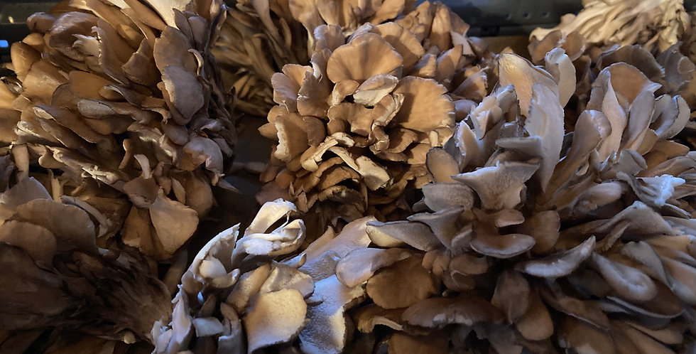 Hen-of-the-Woods Mushrooms (Farmers Market Pickup Only)