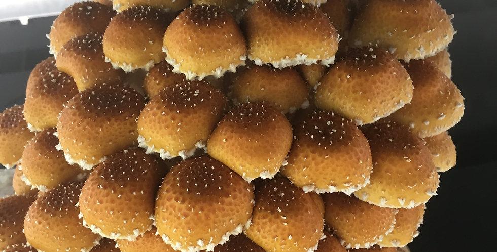 Chestnut Mushrooms (Farmers Market Pickup Only)