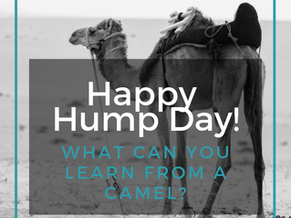 What can you learn from a camel's hump?