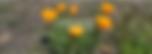 Screen Shot 2018-12-06 at 10.39.16 AM.pn