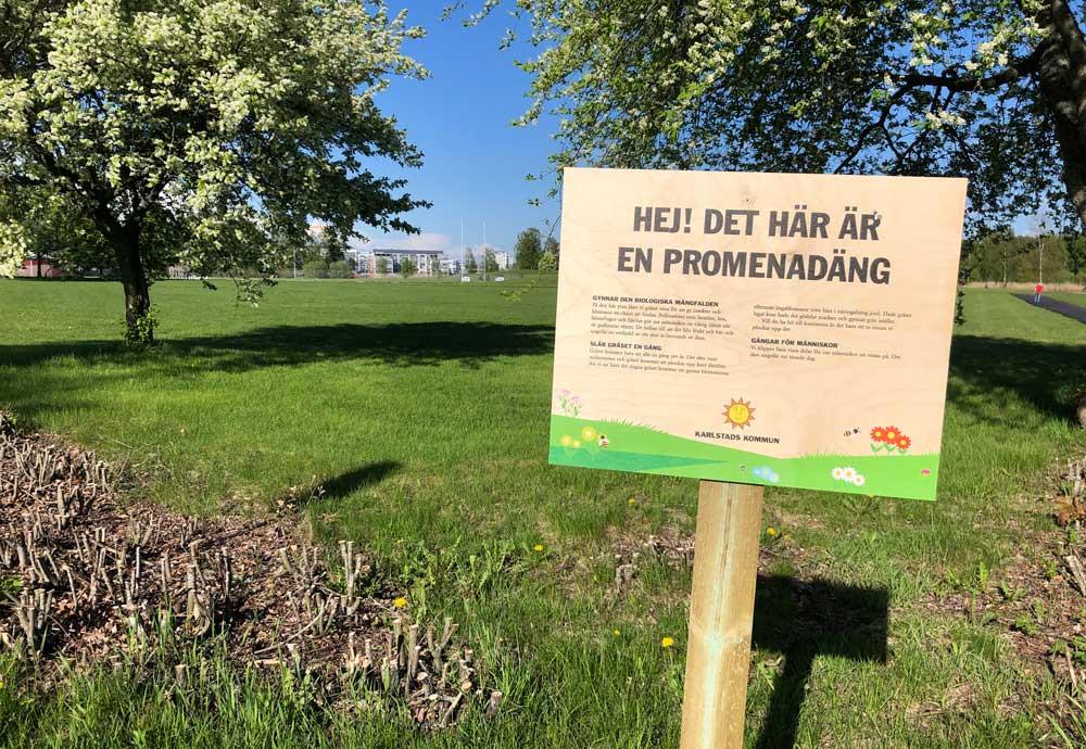 Tio procent av den klippta gräsytan i Karlstads kommun blir i sommar promenadängar istället. Där får gräset växa sig högt medan gångar och mindre ytor klipps så att invånarna kan promenera eller ha picknick där.