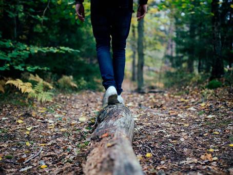 Vad händer med vår hälsa när vi vistas i skog?