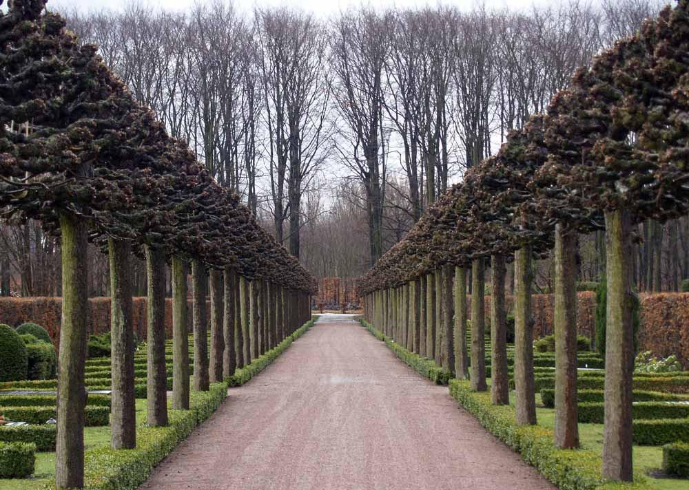 #trädimalmö #MalmöFörsköningsochPlanteringsförening #malmösparker #malmösträd