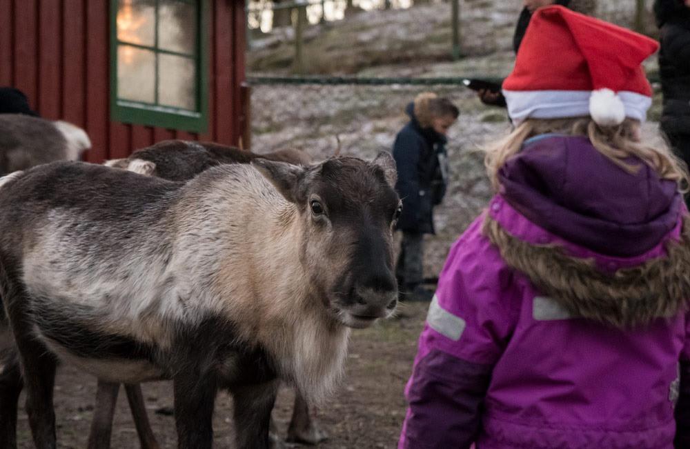#skånesdjurpark #djurensjul #coronasäkradjul #danskringgranen