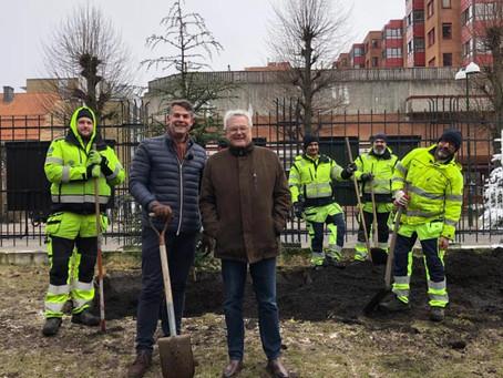 Malmö planterar nya träd som svar på trädvandalism