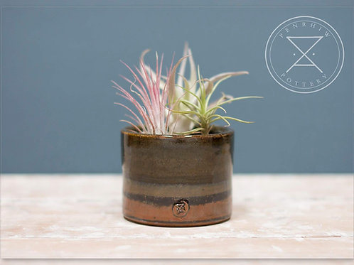 Wide Airplant holder