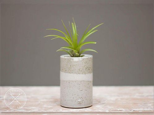 Medium Airplant holder.