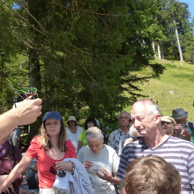 Rene Güttinger zeigt einen Wanzenbeisser-Heugümper
