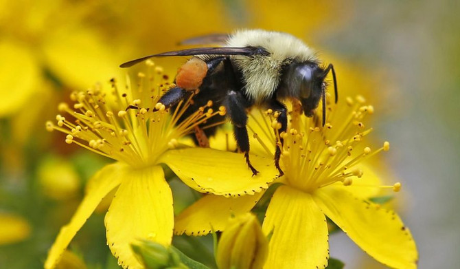 Taxpayers Pay for Researcher to Have Penis Stung by Bees and Get Birds Drunk!