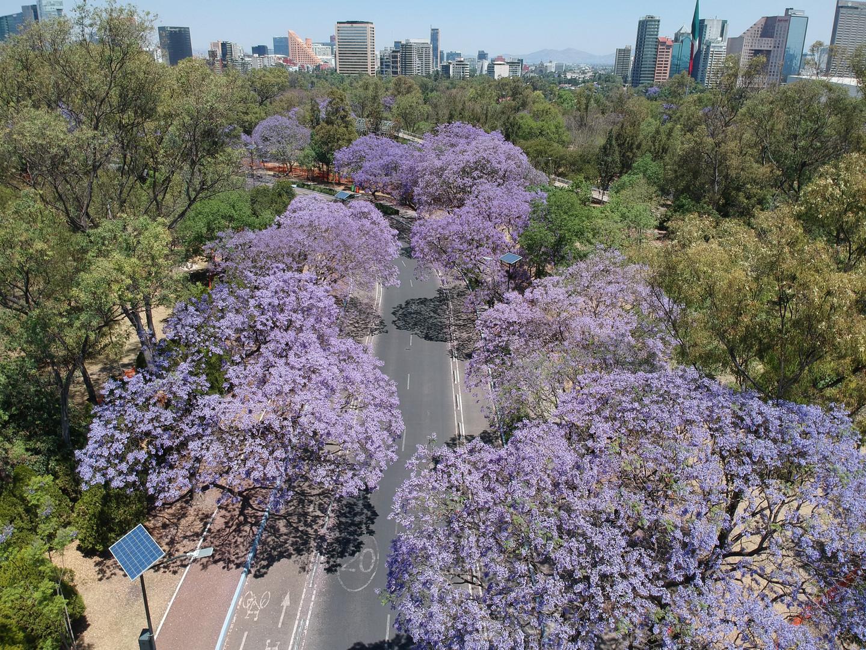 Bosque de Chapultepec 2ª sección