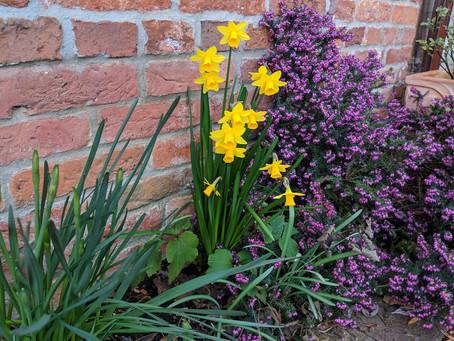 In Our Garden: March