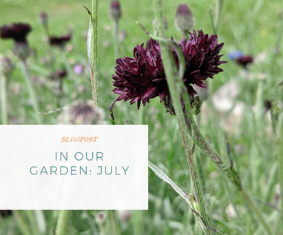 In Our Garden: July