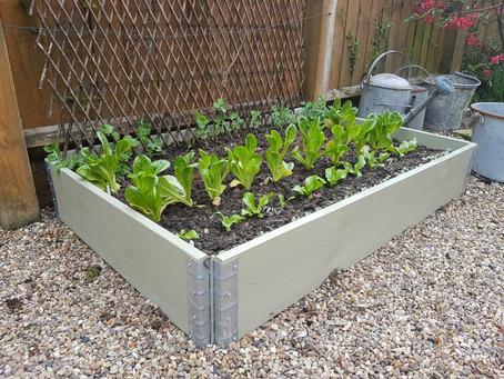 Planting begins!