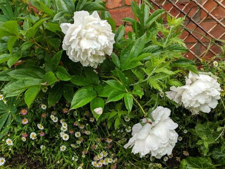 In Our Garden: June