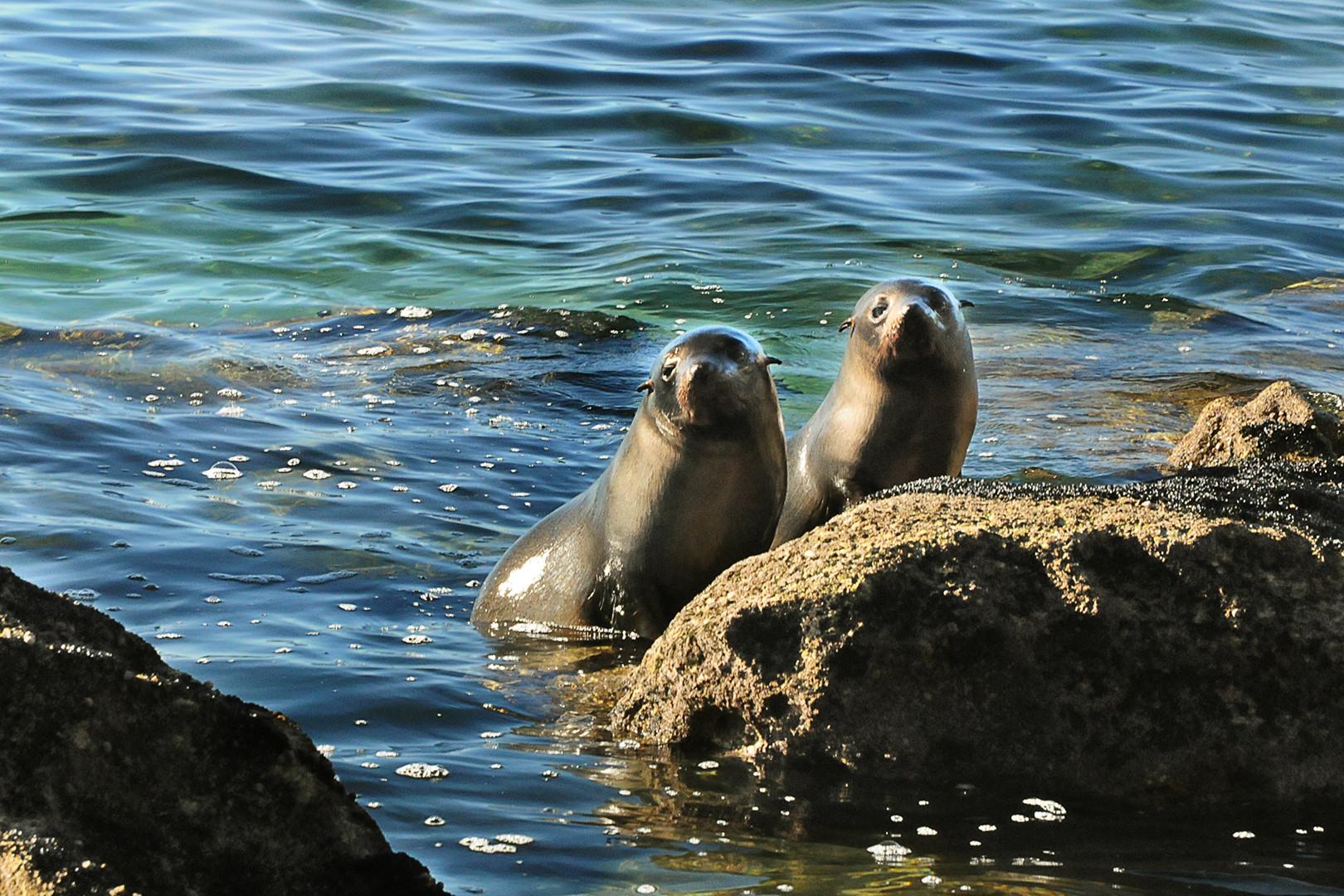 ATNP Seals.jpg