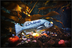 Fish #4