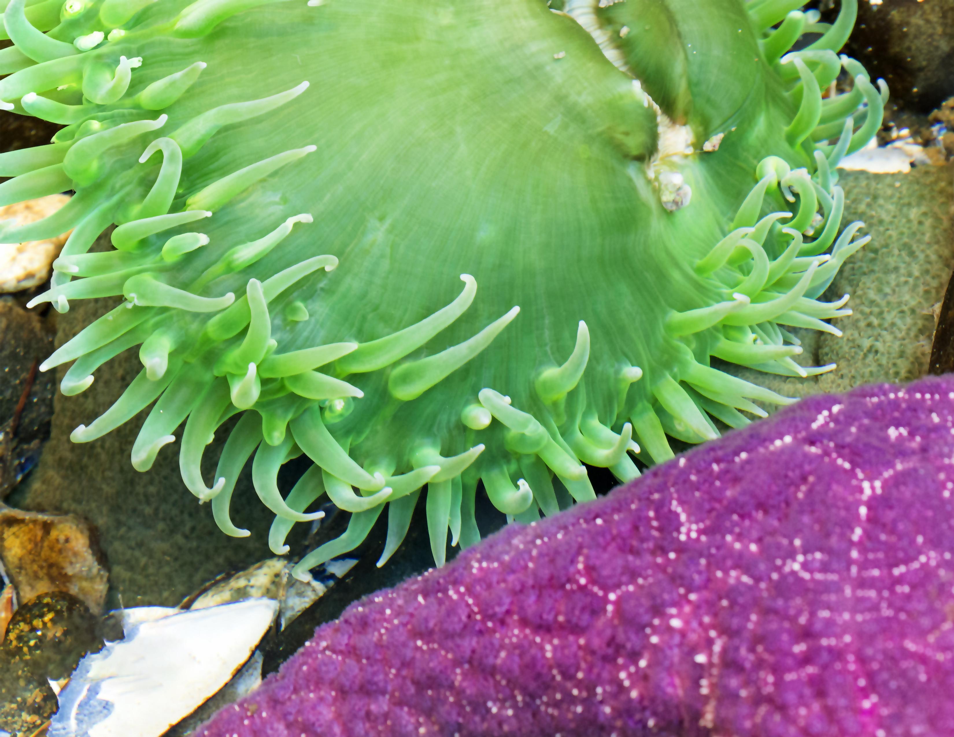 anemone and starfish