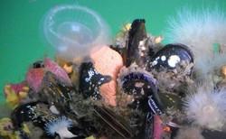 Underwater Discovery 1