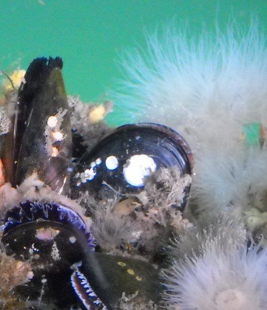 Underwater Discovery 3