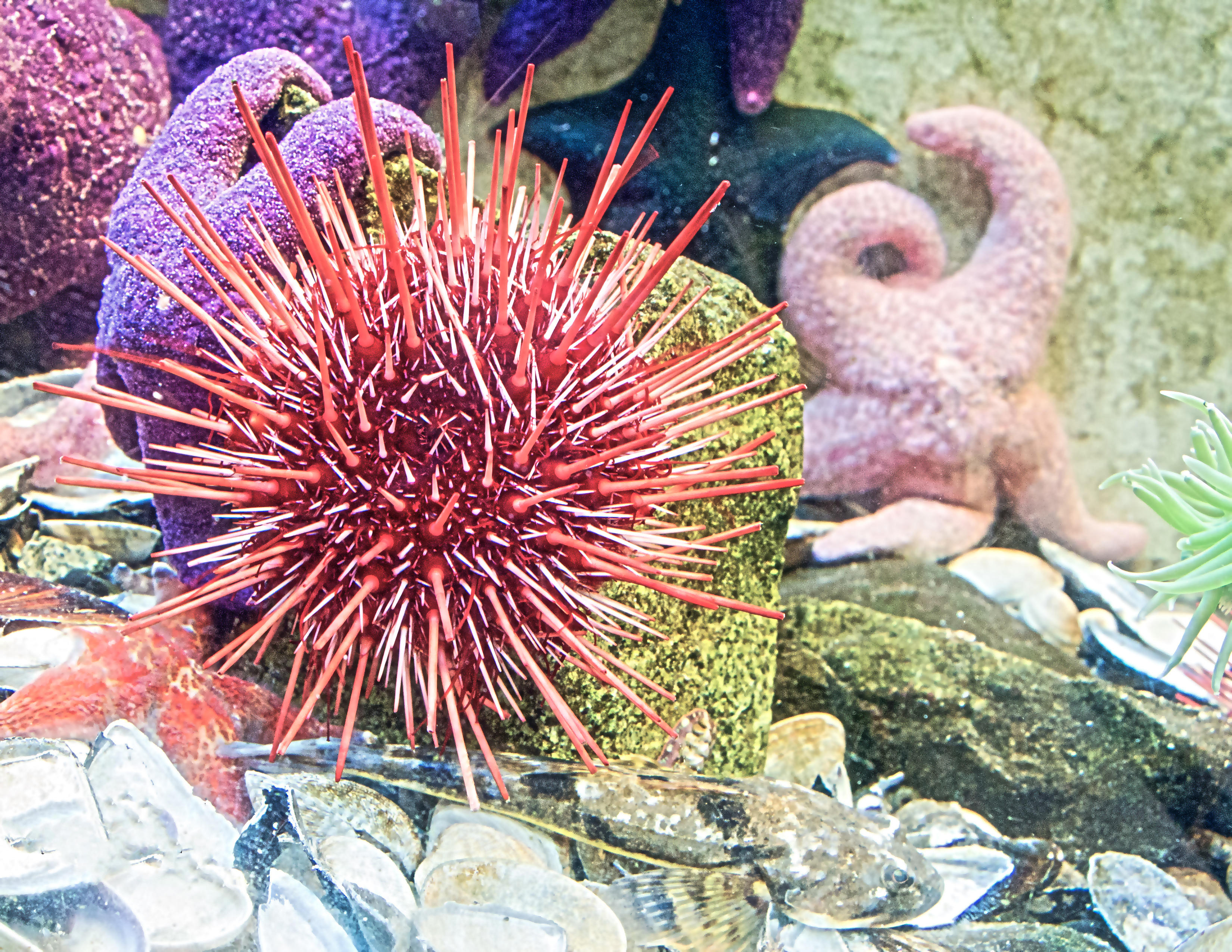 Spiny thing with starfish