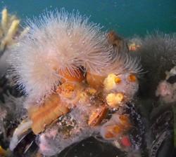 Underwater Discovery 4