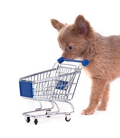 Chihuahua%20Shopping_edited.jpg