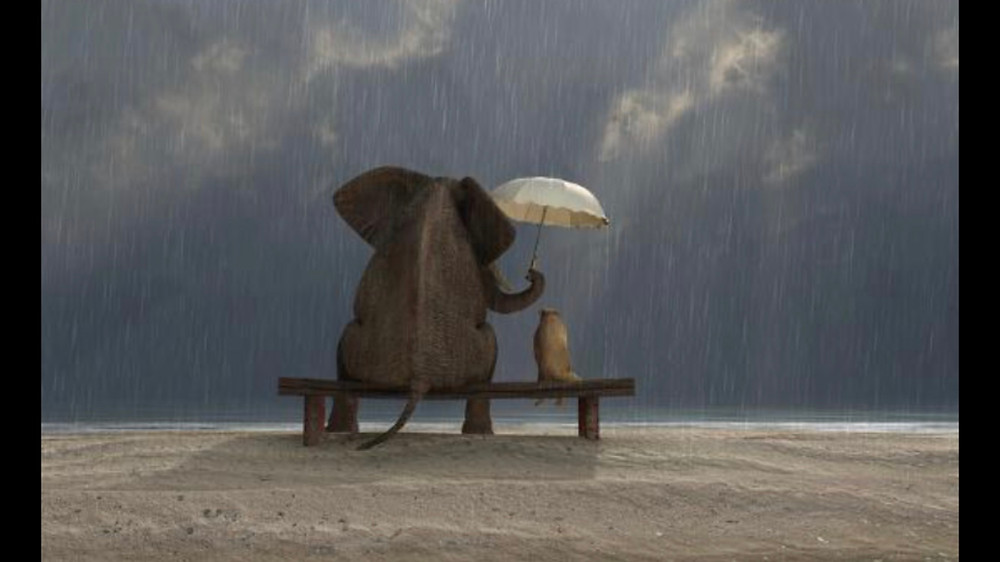 you're looking at the backs of an elephant and of a dog. They are sitting on a bench together looking out at the ocean under a rainy, dark sky with shafts of light coming through the clouds. The elephant is holding an umbrella over the dog's head. They are clearly friends...or at least, they will be.