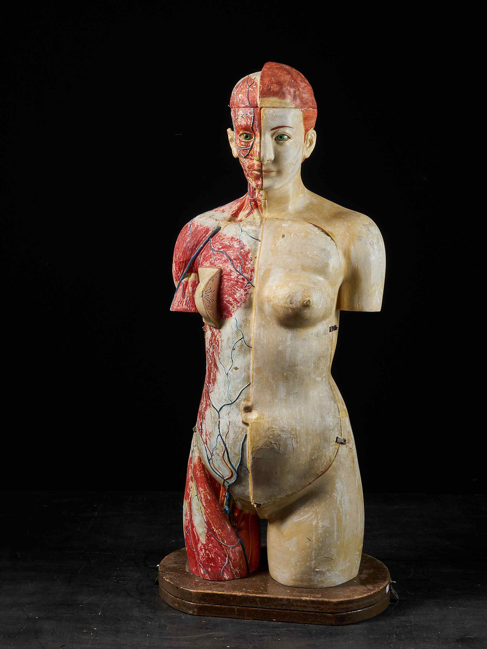 paper mache female torso model from early 1900's; half with skin and hair and half missing first layers of superficial fascia