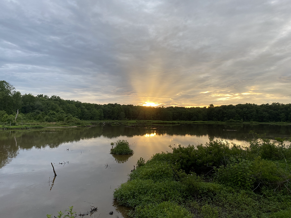 the sun is peeking over a wetlands scene. It's not clear if it's setting or rising, but the beams of light have been separated by the clouds in a way that makes 5 distinct rays of sun visible over the treeetops