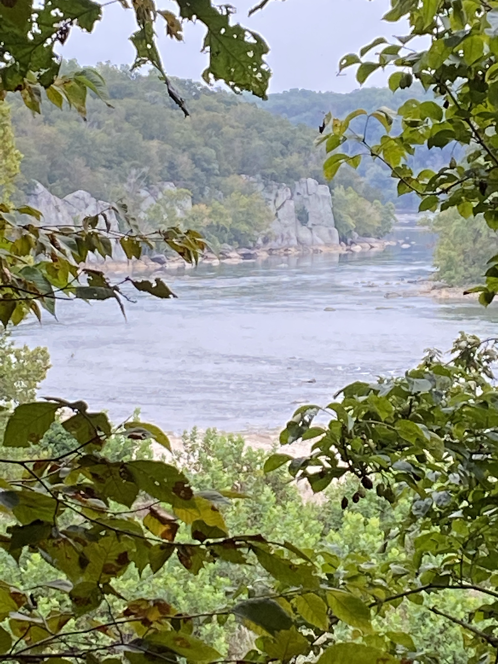 a view through some trees of a bend in the Potomac River from above on a cliff at Great Falls in Virginia