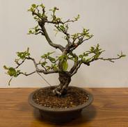 NBS Table Trees Mar 2020 3.jpeg