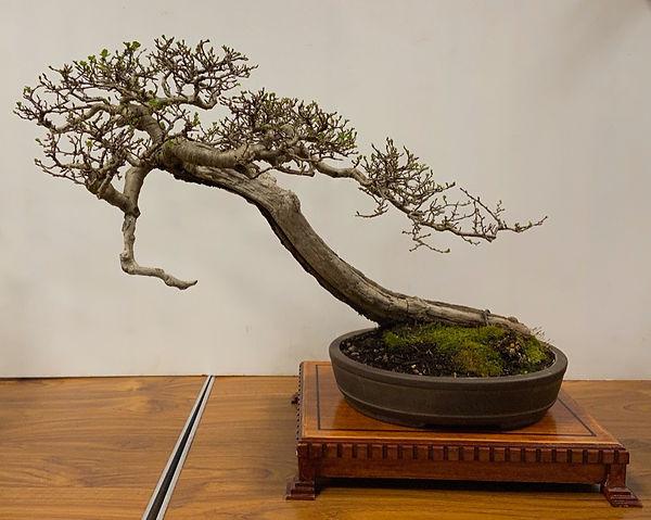 NBS Table Trees Mar 2020 2.jpeg