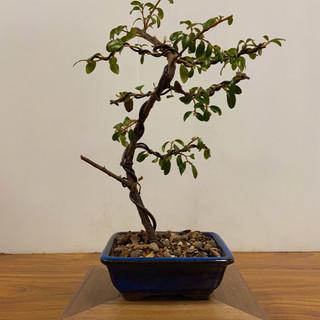 NBS Table Trees Mar 2020 7.jpeg