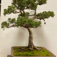 NBS Monthly Trees Oct 2019 10.jpg