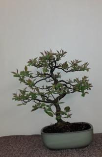 tree5.jpg