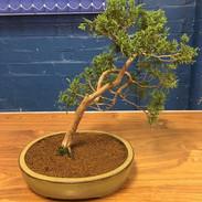 NBS July 2019 Trees 6.jpeg