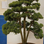 NBS Table Trees Mar 2020 1.jpeg