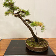 NBS Monthly Trees Oct 2019 12.jpg