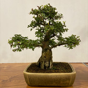 NBS Monthly Trees Oct 2019 3.jpg