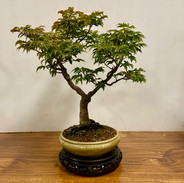 NBS Monthly Trees Oct 2019 6.jpg