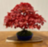 NBS Monthly Trees Oct 2019 7.jpg