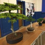 NBS July 2019 Trees 15.jpg