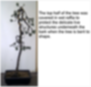 Scots Pine 2 Wire-Repot10-5-12.png