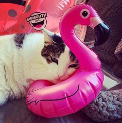 #poolboy #catsofinstagram #kittycat  #かわ