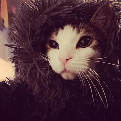 Winter is coming. #cats #catsofinstagram