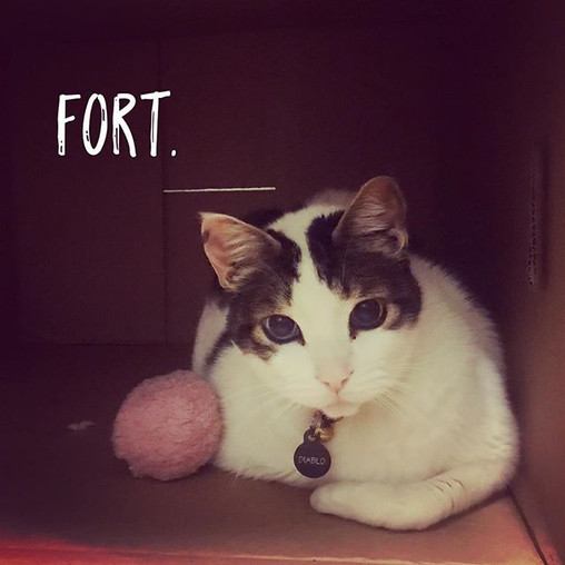 Iz cat fort. #catfort #かわいい  #ねこ.jpg