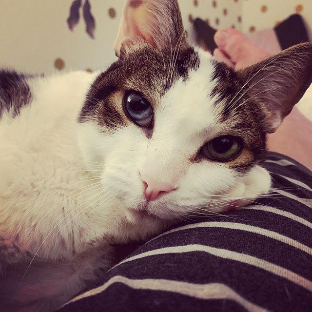 Clingy. #catsofinstagram #かわいい #ねこ.jpg