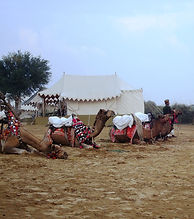 Camel-safari-Jaisalmer-things-to-do-in-sam-sand-dunes-camping-vedic-walks.JPG