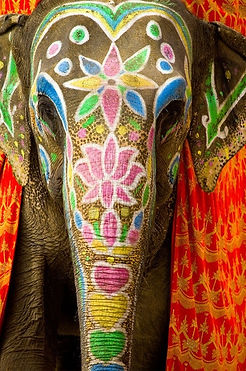 Elephant-Safari-Jaipur-Ride-Bathing-Village-Best-Book-Elefantastic-Elefun-Eleday-village-visit-vedic-walks-travel-company-agent-Rajasthan